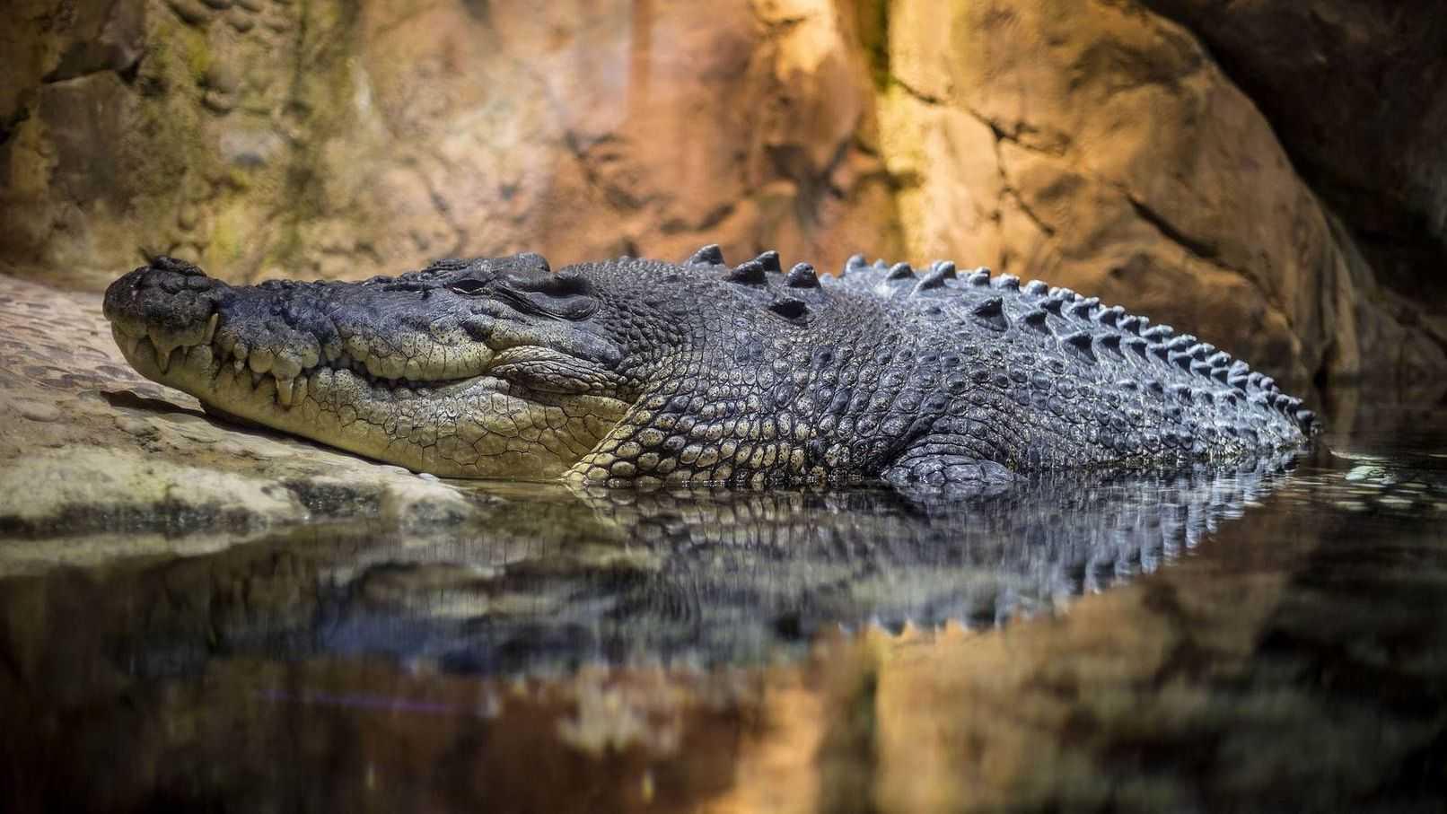 Крокодил в аквариуме