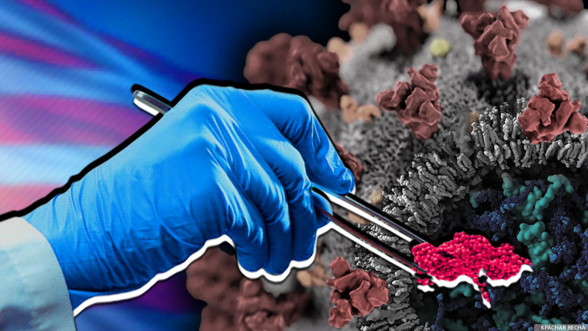 Создание коронавируса