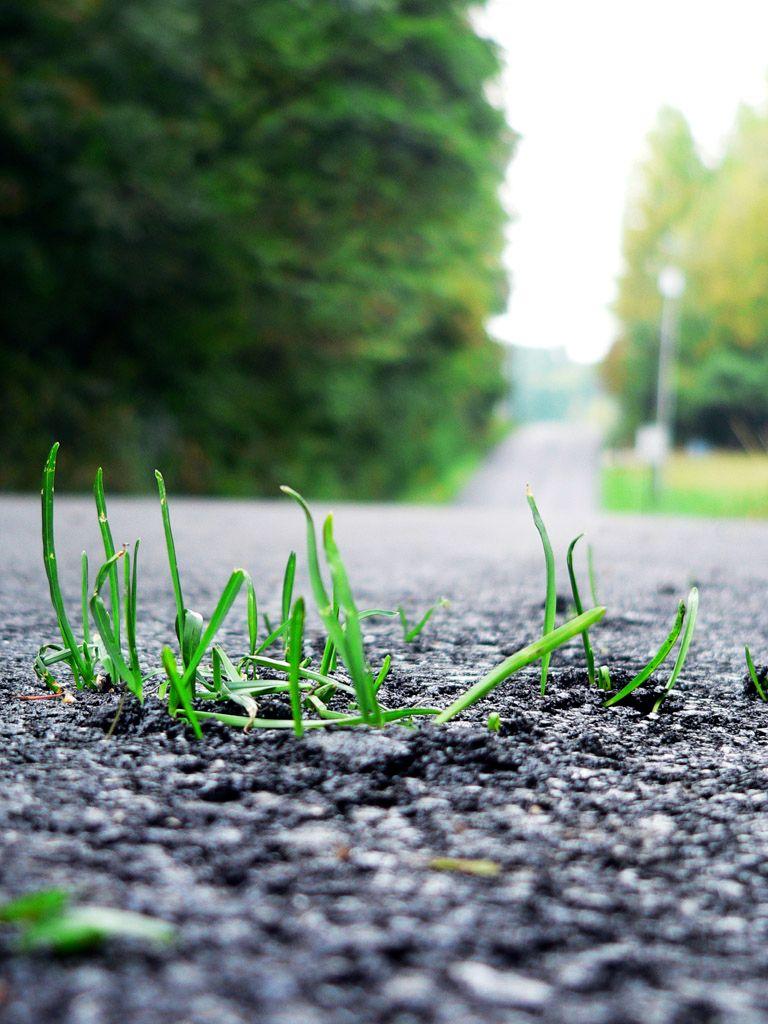 Трава пробивается сквозь асфальт
