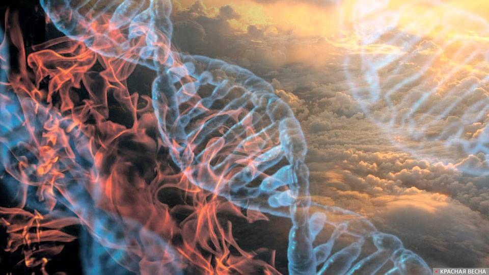 Гены несильно влияют на длительность  жизни, узнали  ученые