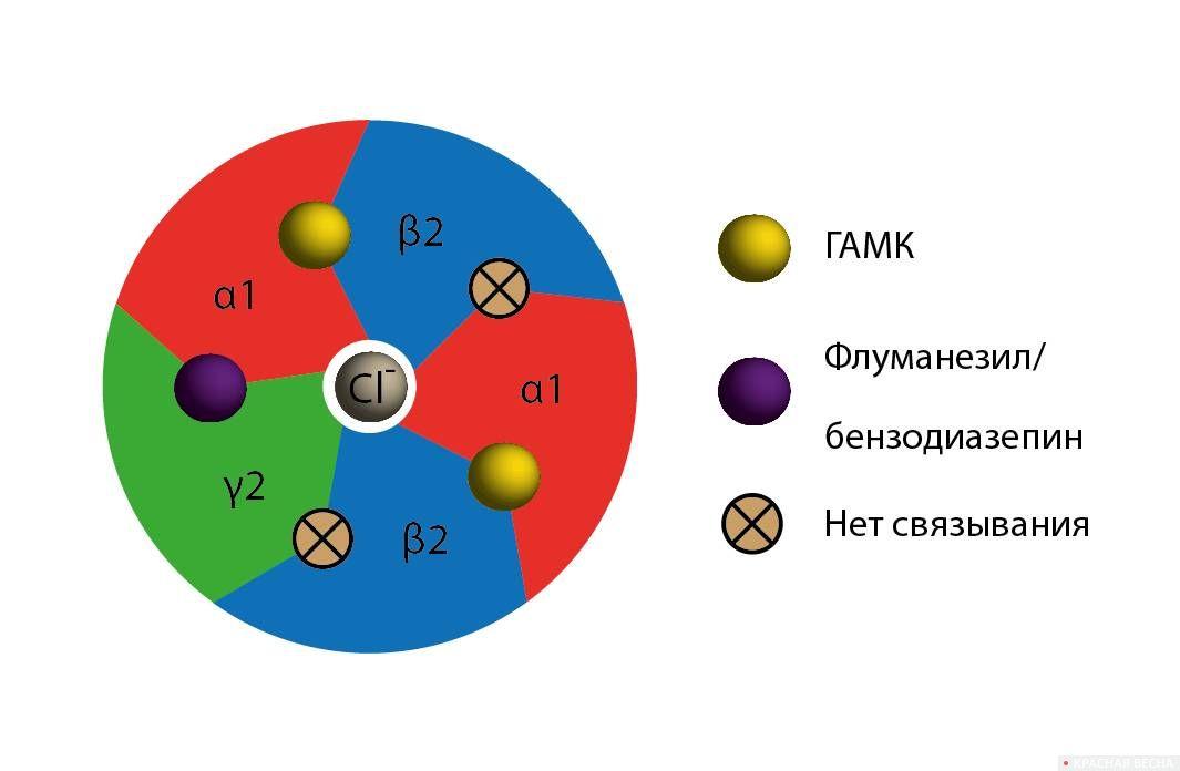 Схема ГАМК-рецептора в комплексе с ГАМК и флуманезилом/бензодиазепином (вид сверху)