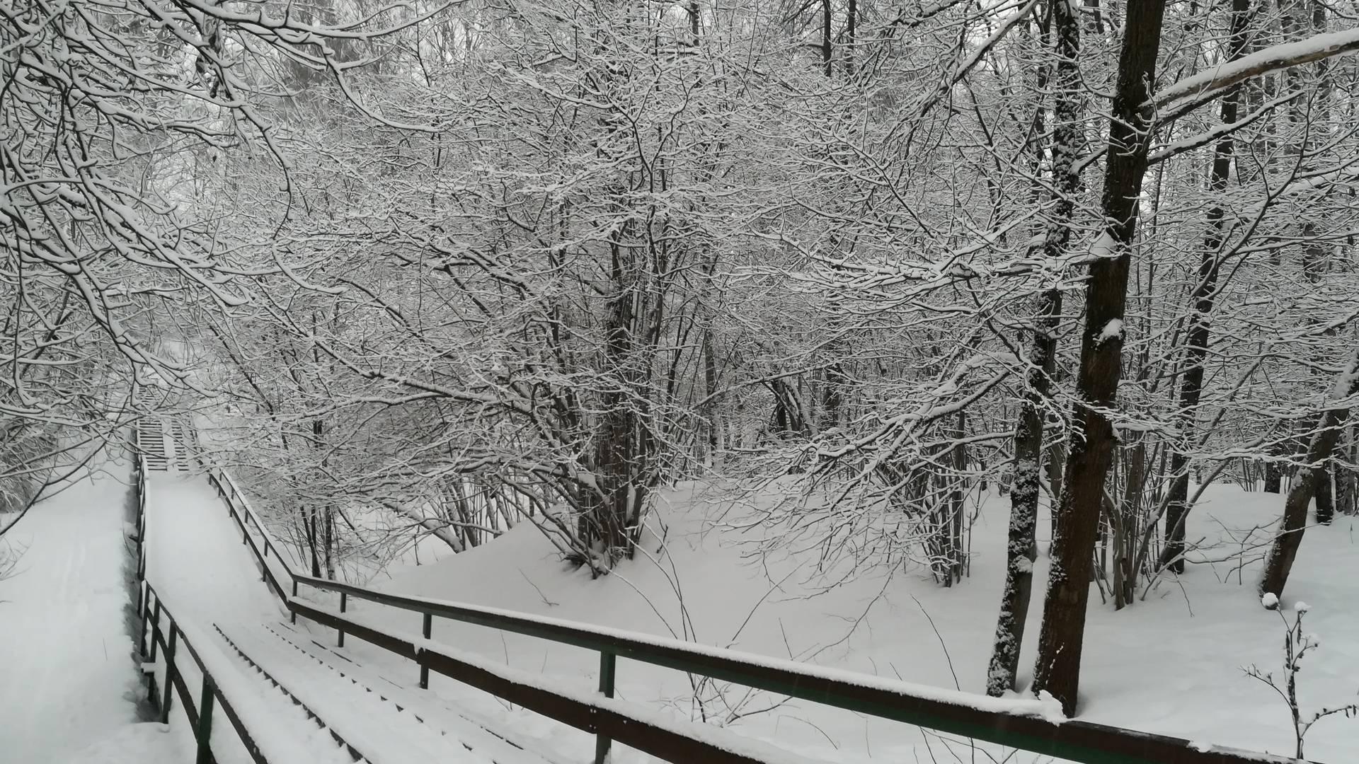 Битцевский парк.