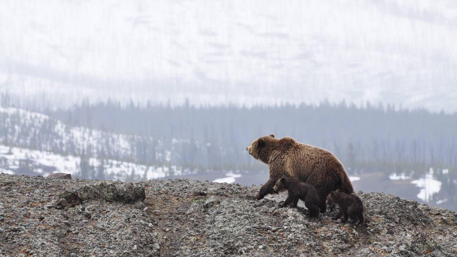 Природа арктической зоны