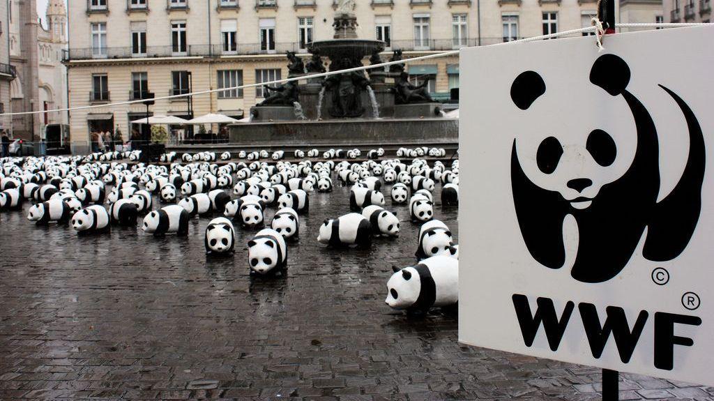 Одна из акций WWF