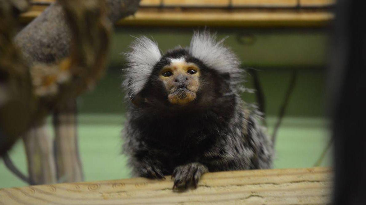 Мартышка в зоопарке