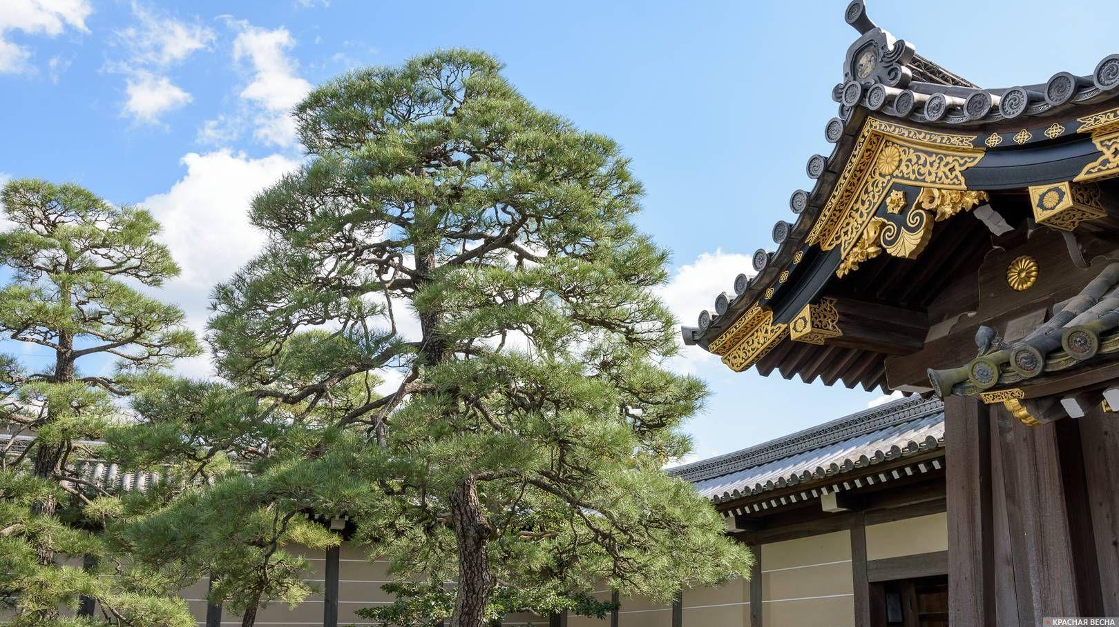 Дерево у ворот замка Нидзё, Киото, Япония