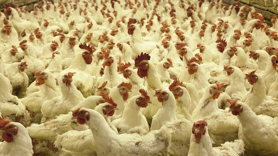 Российская Федерация  и КНР  подпишут соглашение овзаимных поставках мяса и продуктов измолока