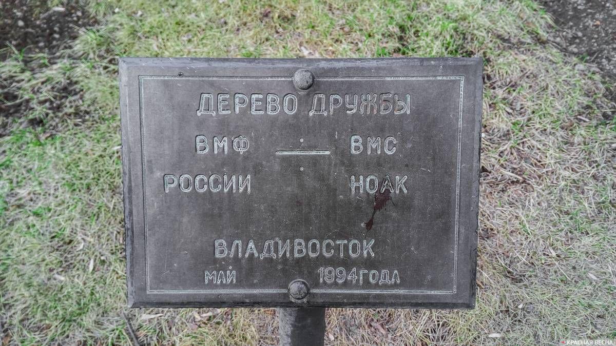 Дерево дружбы ВМФ РФ - ВМС НОАК во Владивостоке