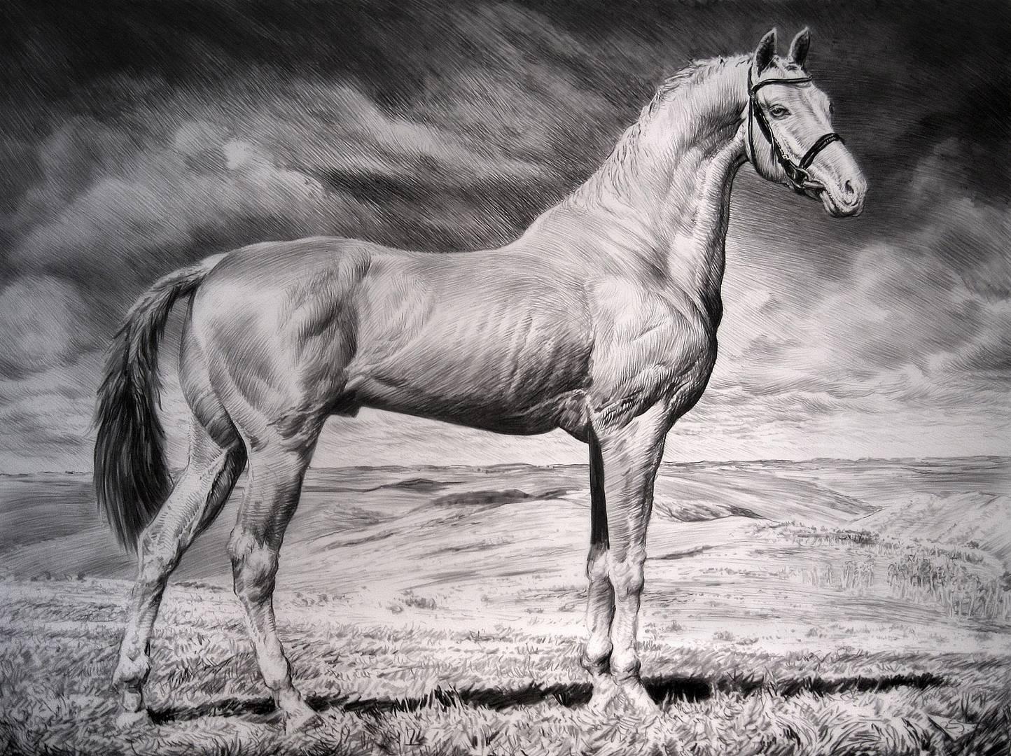 Рик Шайфер. Ахалтекинец IV. 2016. (Ахалтекинская порода, также называемая «небесной лошадью» — одна из древнейших верховых пород, создана народной селекцией в районах нынешней Туркмении)