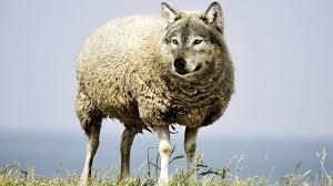 Волк в овечтей шкуре