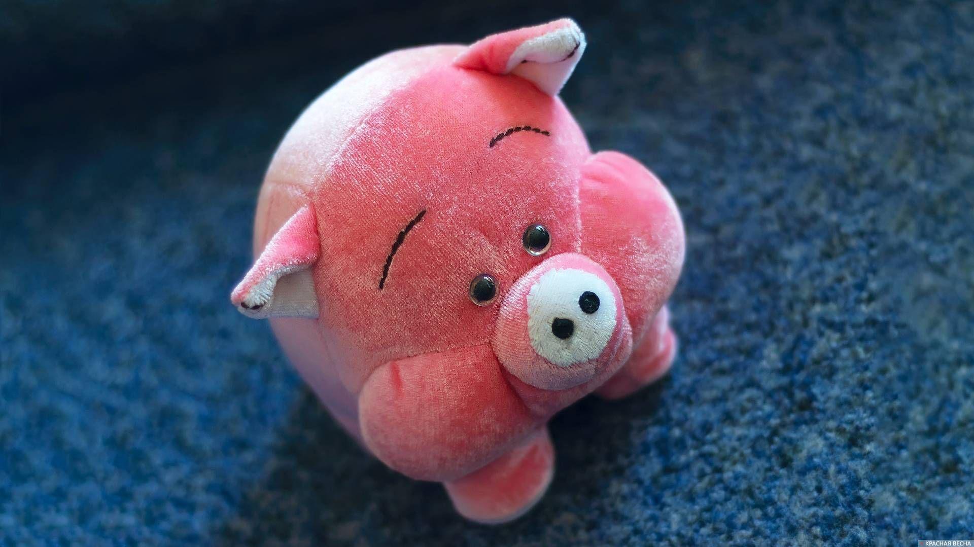 Грустная свинка картинка