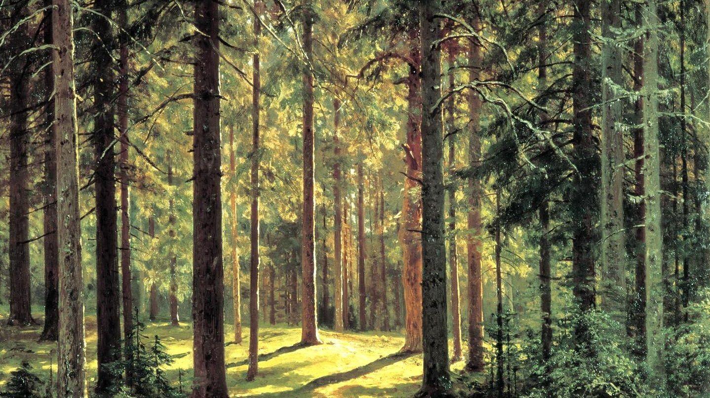 Иван Шишкин. Хвойный лес. Солнечный день (фрагмент) 1895