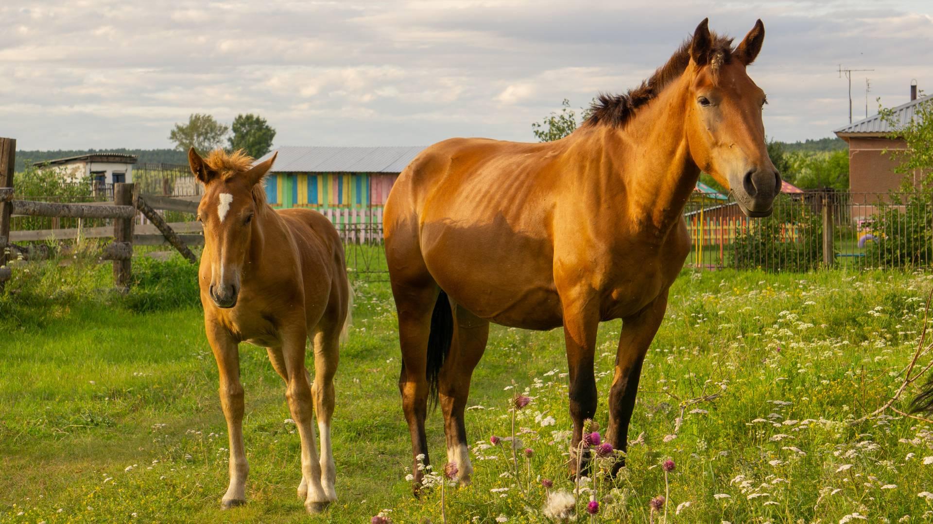 Пин от пользователя Наталья на доске Красивые лошади | Красивые ... | 1080x1920