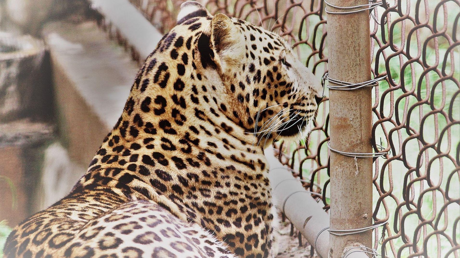 Приморская генпрокуратура выявила нарушение взоопарке, где леопард атаковал ребенка