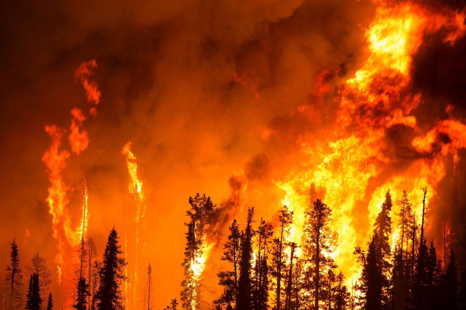 Лесной пожар, лицензия: CC0 1.0