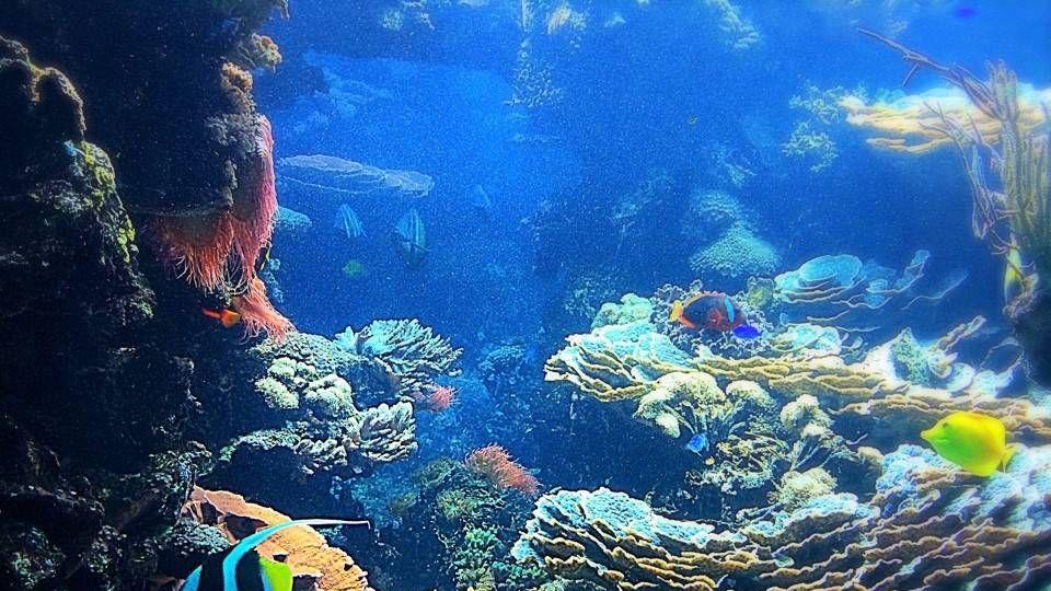 Подводные глубины