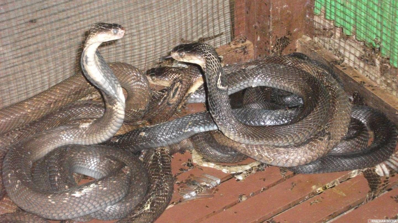 смотреть про змей картинки