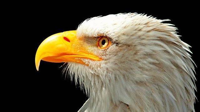 Санкции от орлана