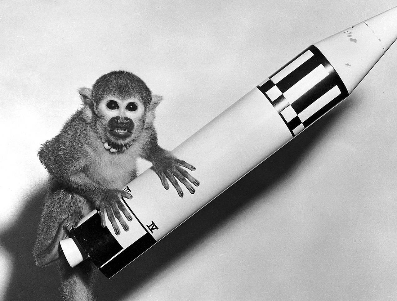 Обезьяна на модели ракеты