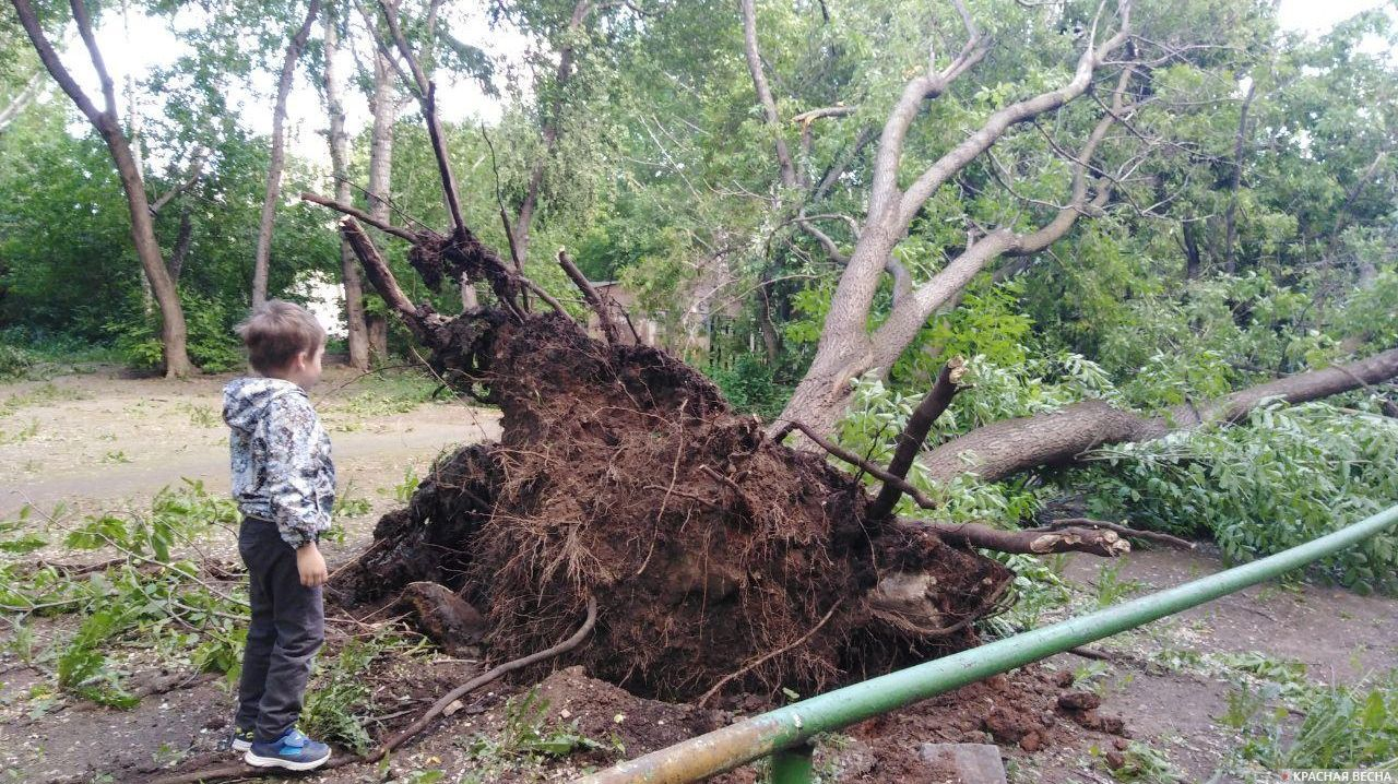 Последствия урагана в Екатеринбурге, май 2020 года