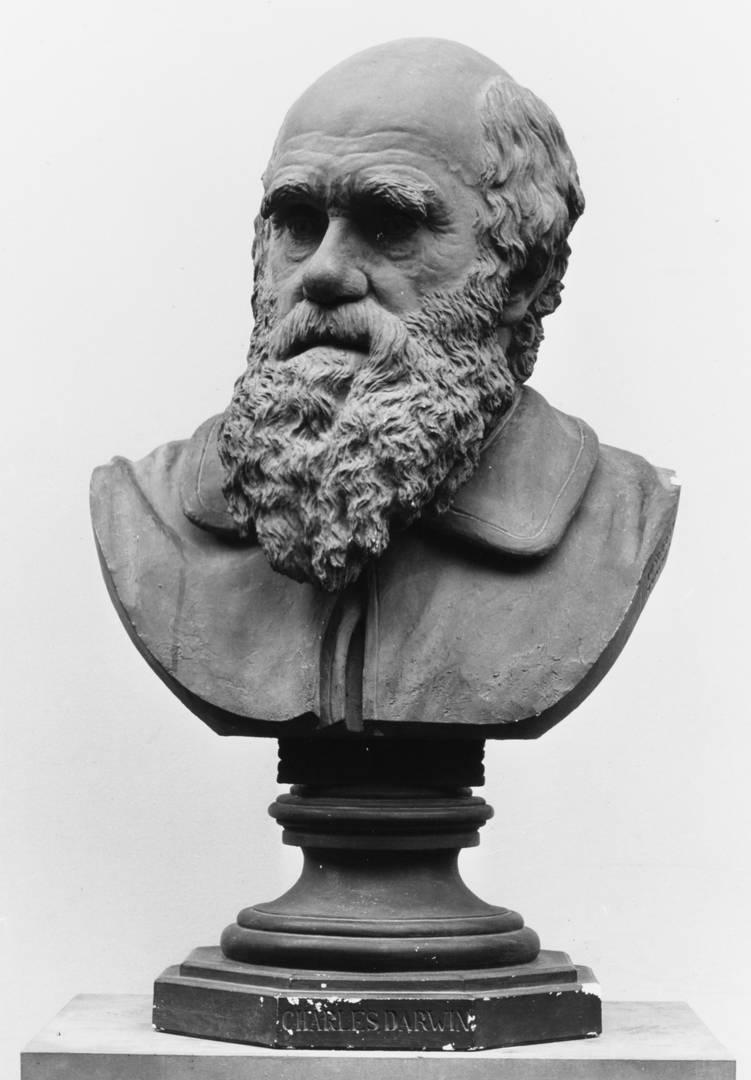 Йозеф Эхтлер. Чарльз Дарвин. 1883–1884 гг.