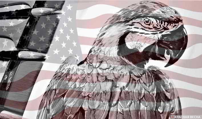 Американский попугай