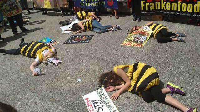 Манифестация против Monsanto. Люди изображают пчел, погибших из-за генномодифицированных сельхозкультур