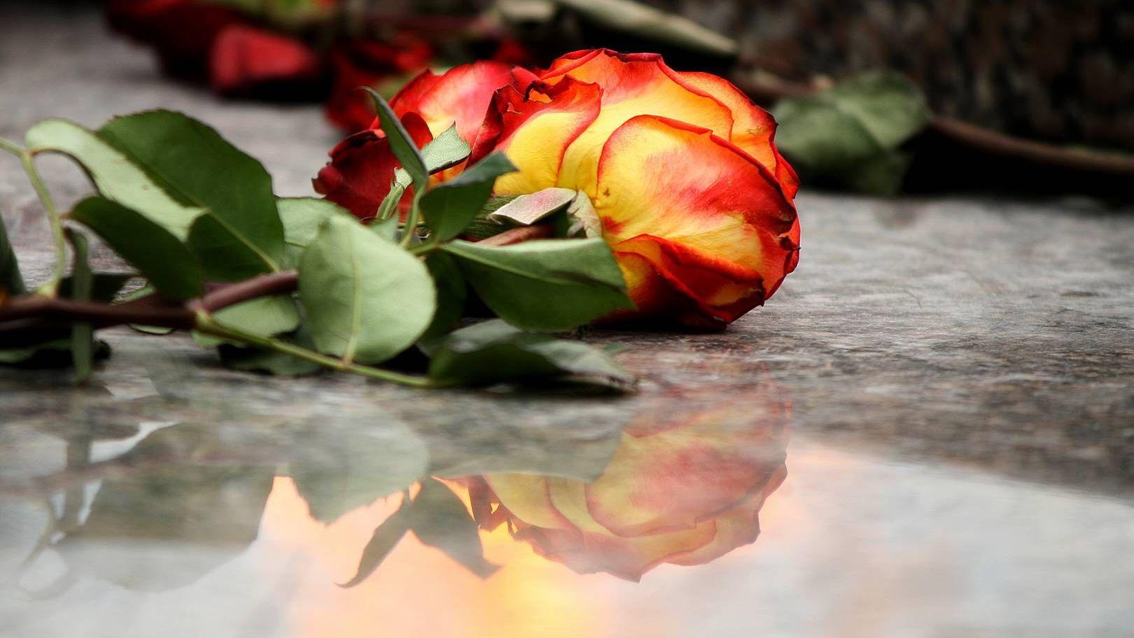 Цветок у вечного огня