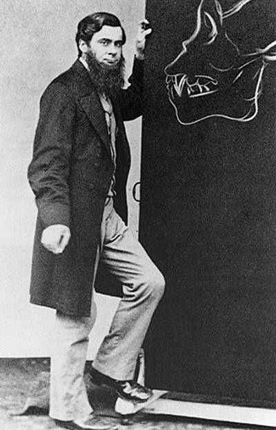 Генри Гексли с наброском рисунка черепа гориллы. ок. 1870