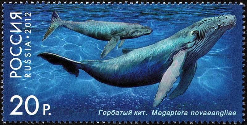 Почтовая марка  «Фауна России. Китообразные. Горбатый кит». Дизайнер – А. Поварихин
