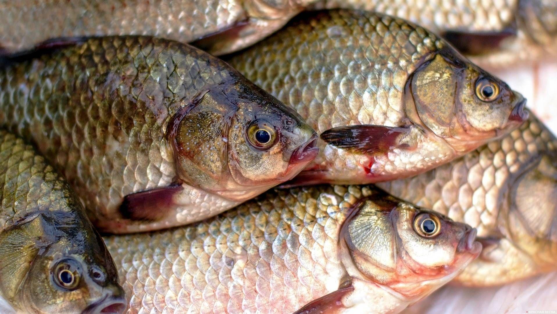 счет своей виды рыб в дону фото можете