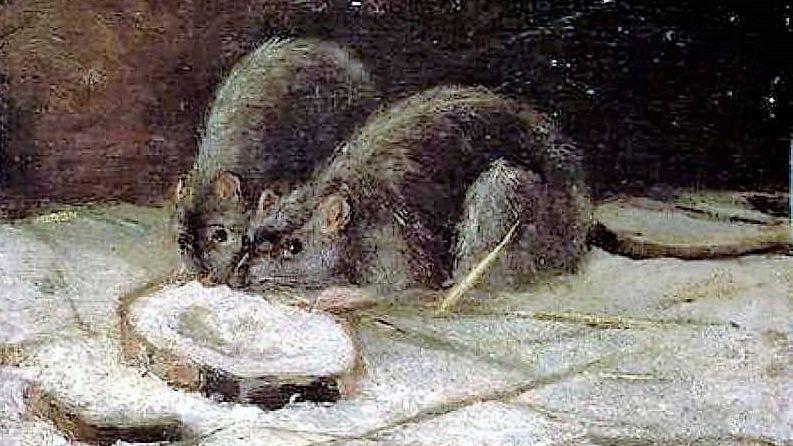 Винсент Ван Гог «Две крысы», 1884 год, фрагмент