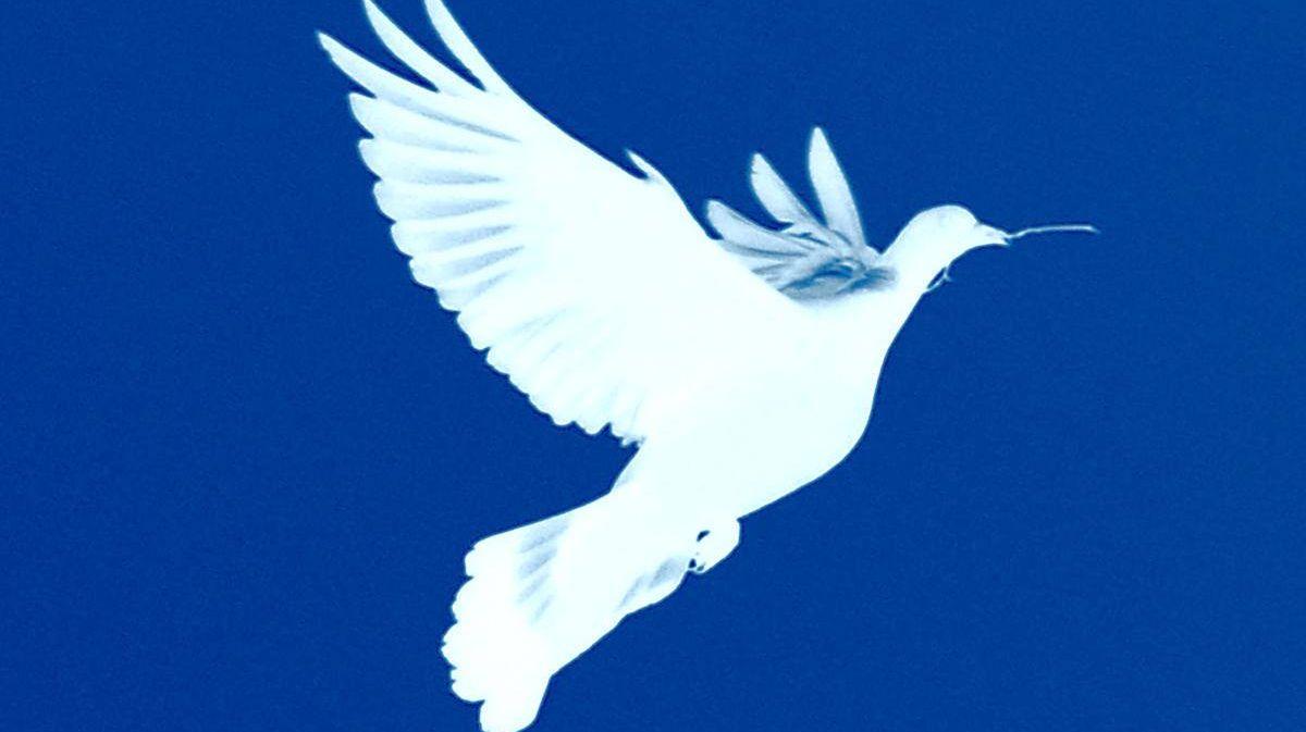 Картинки голубя мира
