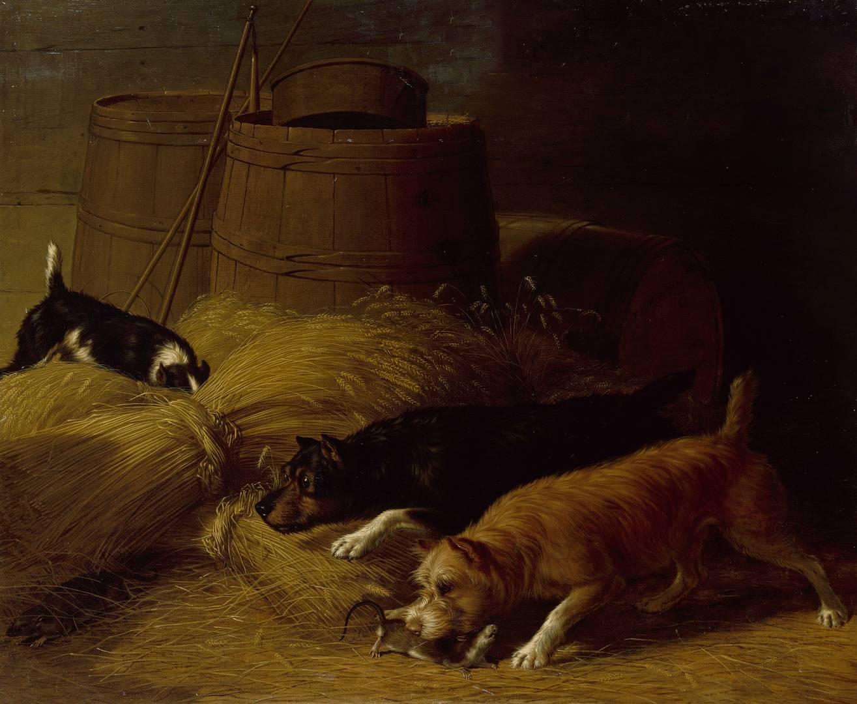 Томас Хьюз Хинкли. Крысы среди снопов ячменя. 1851
