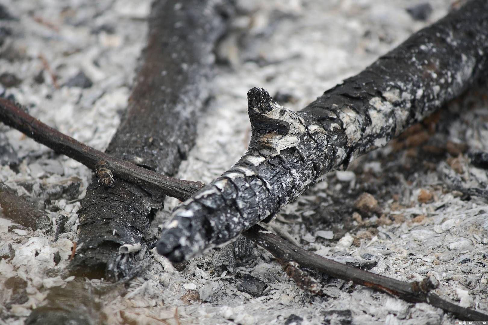Сгоревшие деревья
