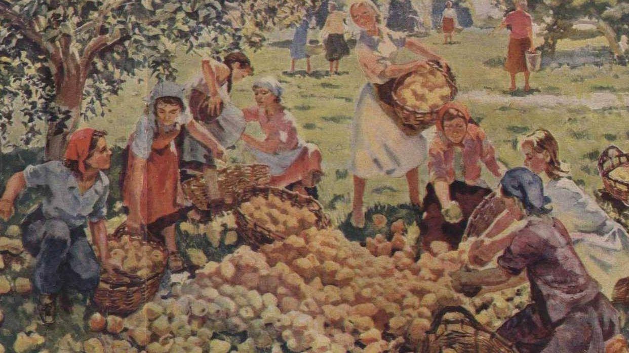 Около 700 тонн «вредных» овощей ифруктов изъято изпродажи в РФ