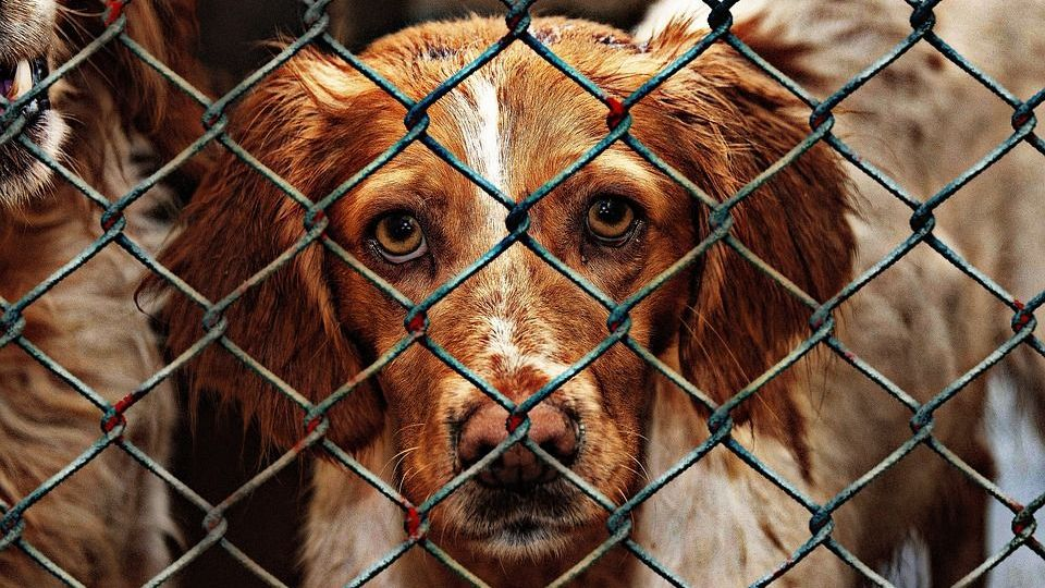 stop excessive euthanization in animal shelters