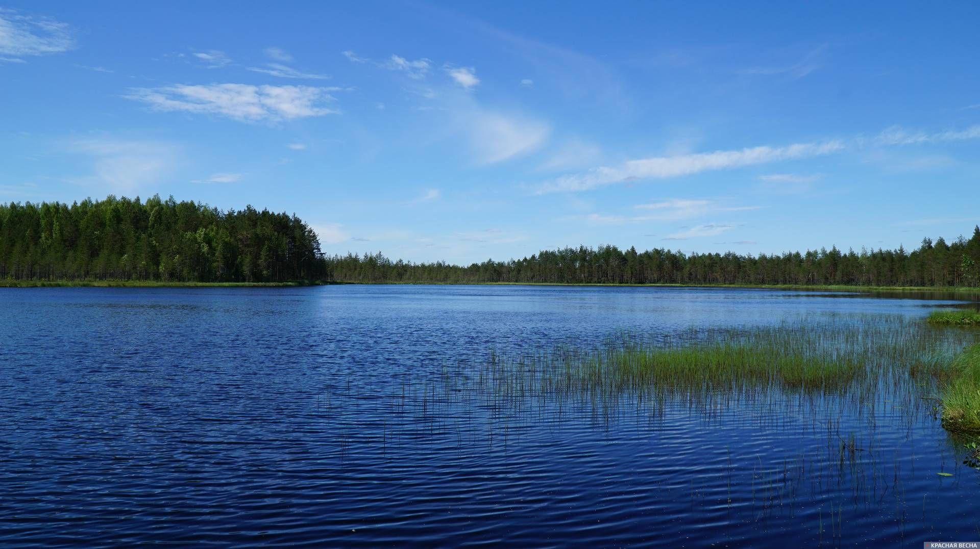 Озеро Чернушка. Ленобласть. 12.06.2019