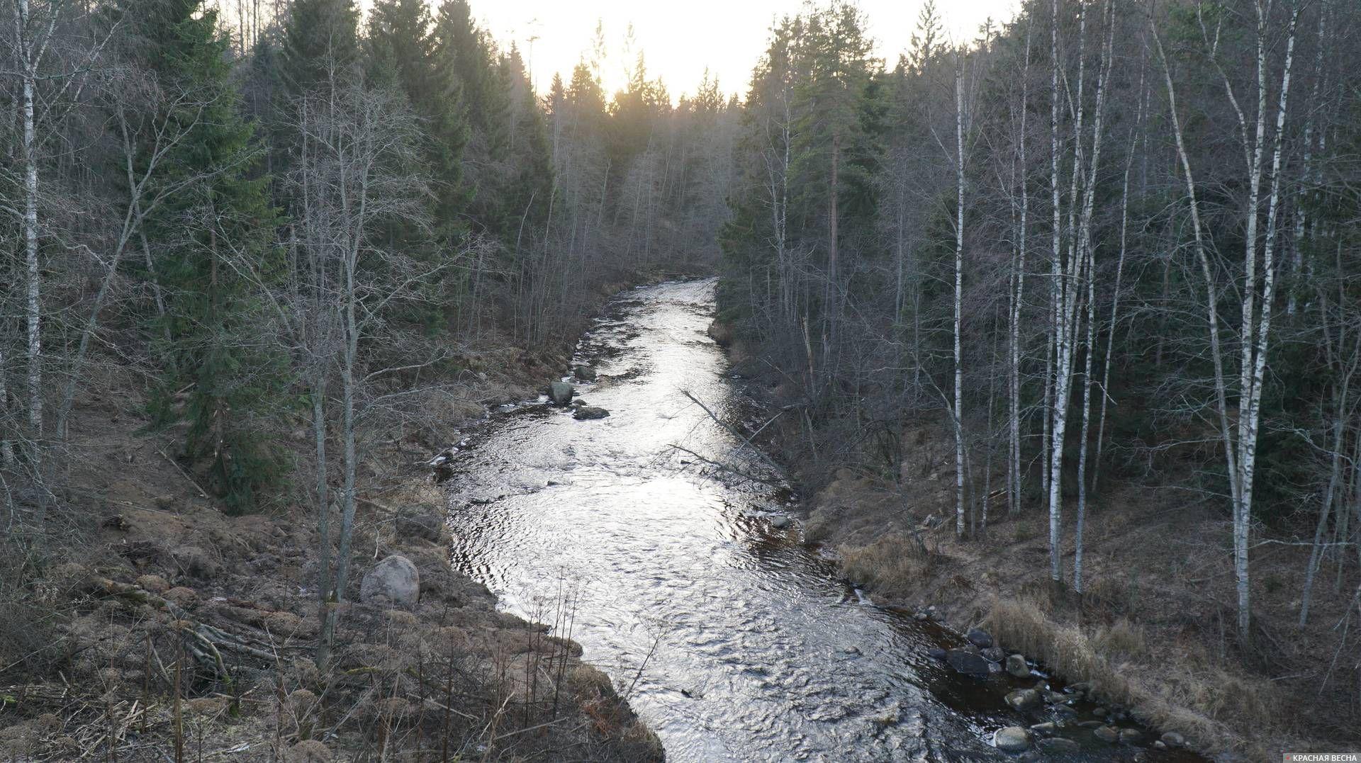 Река Сестра неподалеку от Майнило, бывшая советско-финляндская граница. 23.11.2019