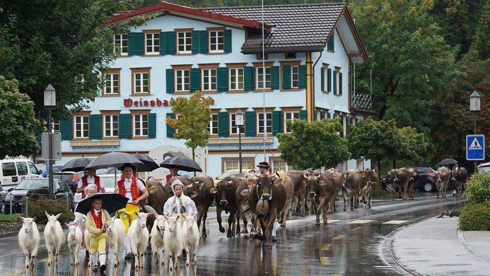 Швейцарские козы