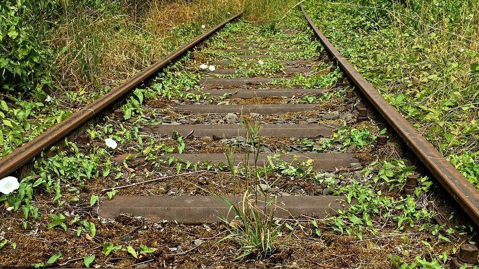 Заросшая железная дорога